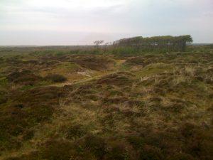Texel-mei2016-4