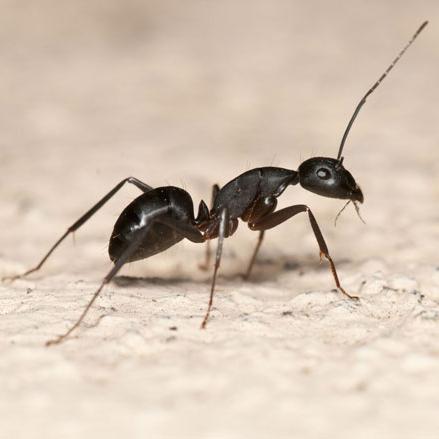 7. Mieren zoeken