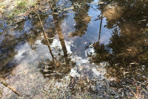 puddle magic 2